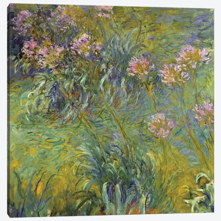 Agapanthus, 1914-26 Canvas Print #BMN6443} by Claude Monet Canvas Print
