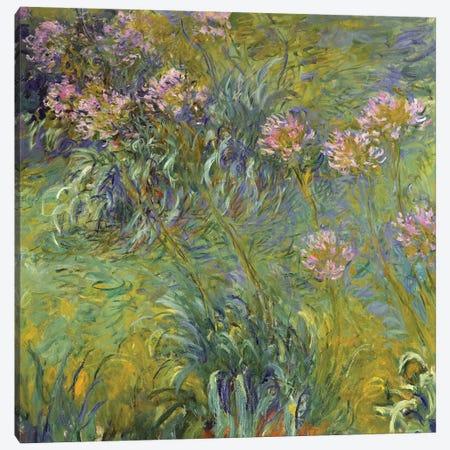 Agapanthus, 1914-26 Canvas Print #BMN6443} by Claude Monet Canvas Print