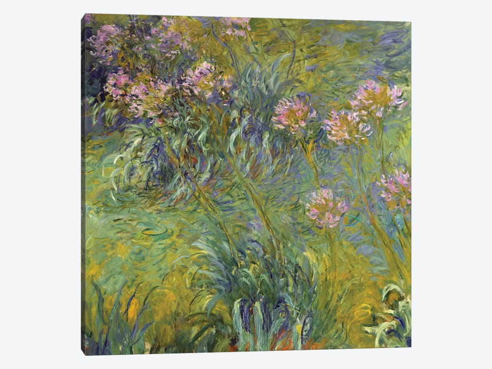 Agapanthus, 1914-26 by Claude Monet 1-piece Canvas Art Print