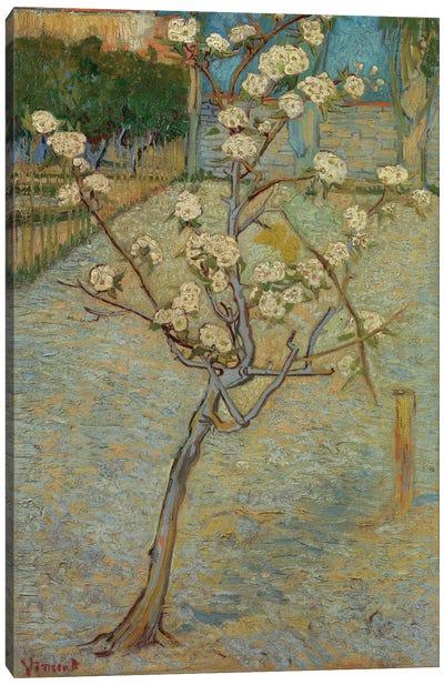 Small Pear Tree In Blossom, 1888 Canvas Print #BMN6515