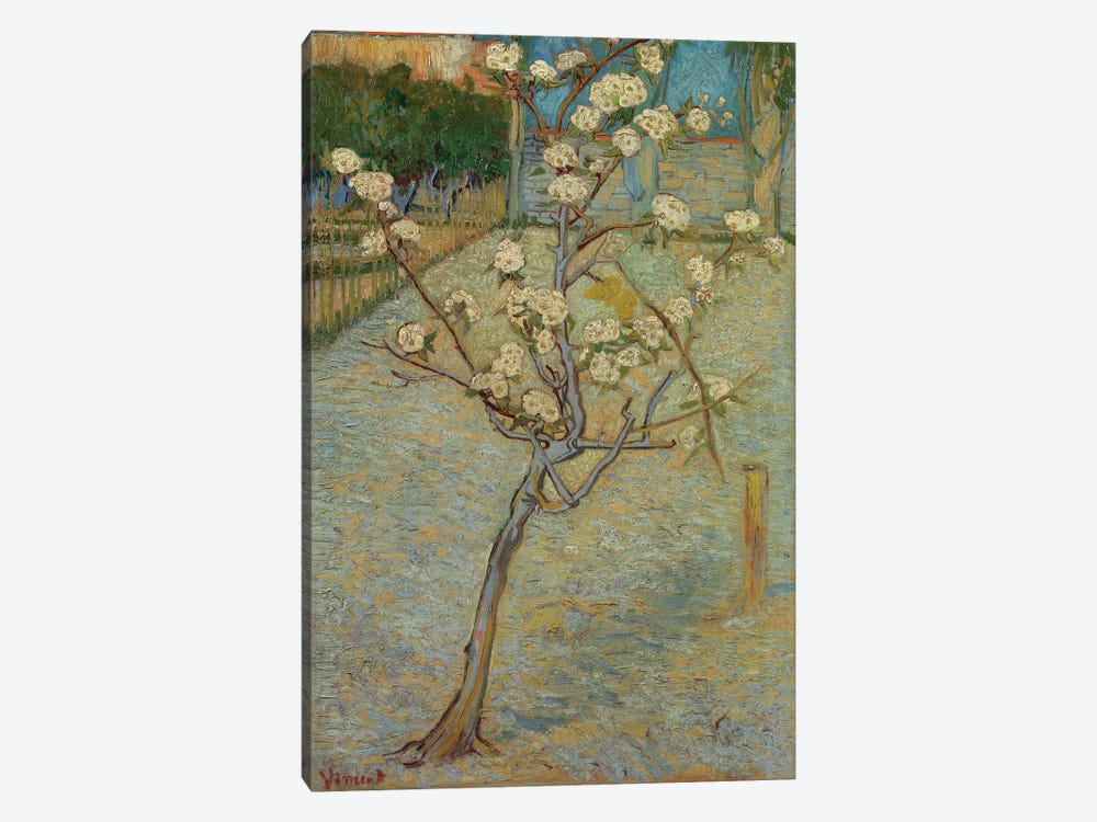 Small Pear Tree In Blossom, 1888 1-piece Canvas Print