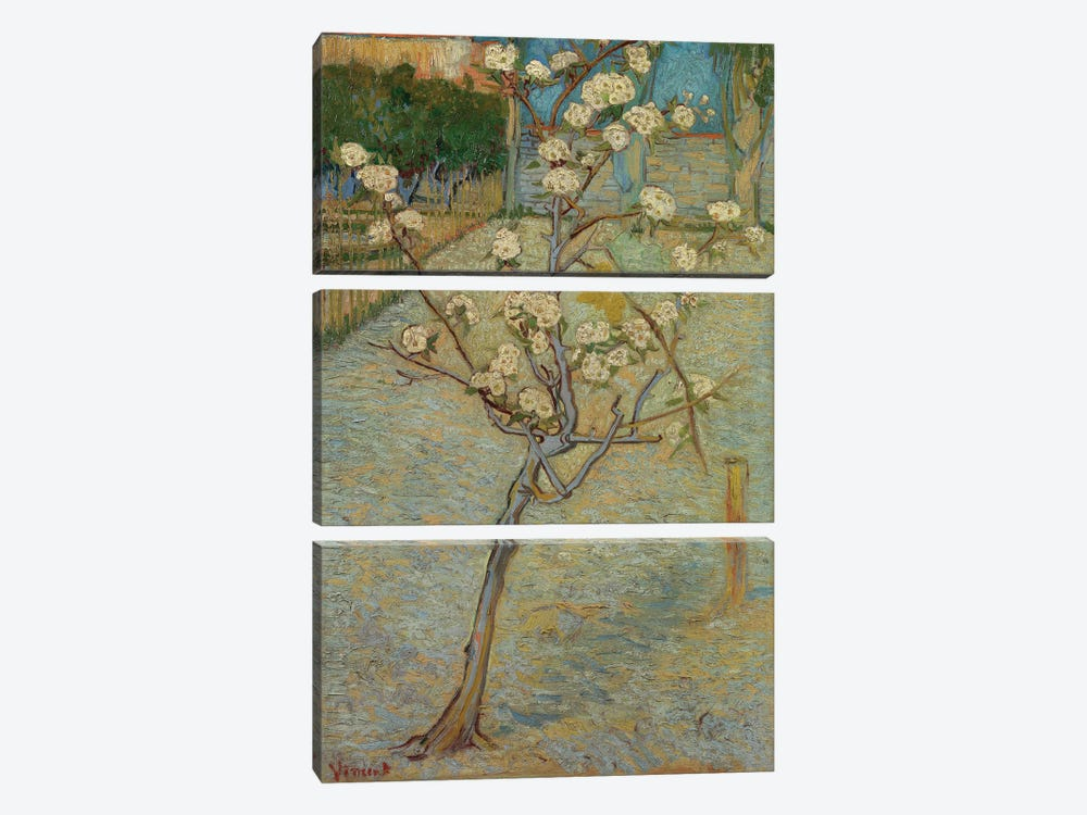 Small Pear Tree In Blossom, 1888 3-piece Canvas Print