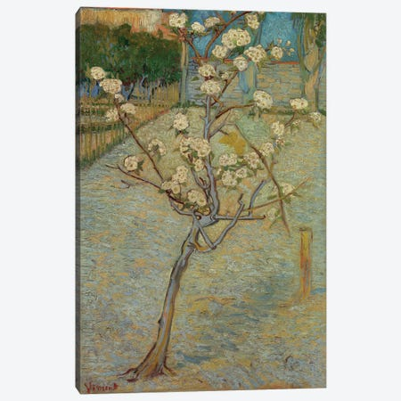 Small Pear Tree In Blossom, 1888 Canvas Print #BMN6515} by Vincent van Gogh Canvas Art