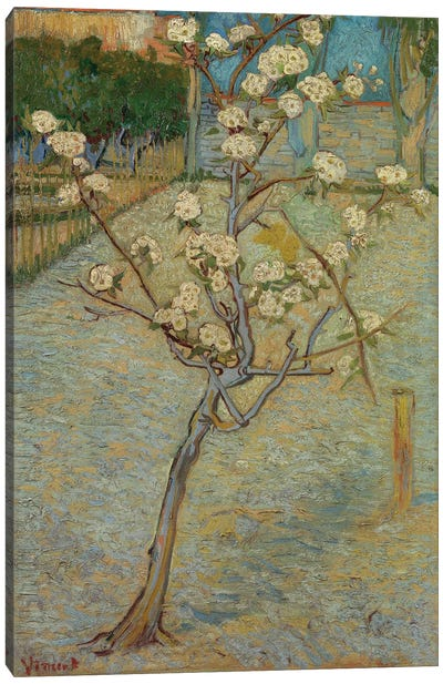 Small Pear Tree In Blossom, 1888 Canvas Art Print