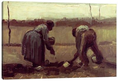 Two Peasants Planting Potatoes, 1885 Canvas Print #BMN6517