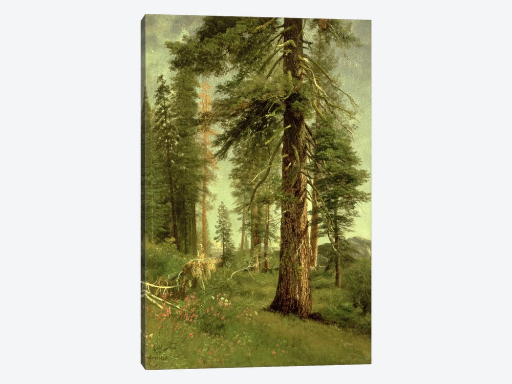 California Redwoods by Albert Bierstadt 1-piece Canvas Art