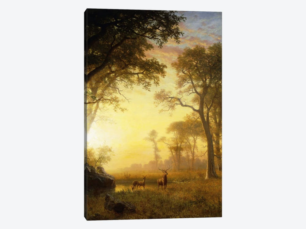 Light In The Forest 1-piece Canvas Print