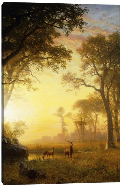 Light In The Forest Canvas Art Print
