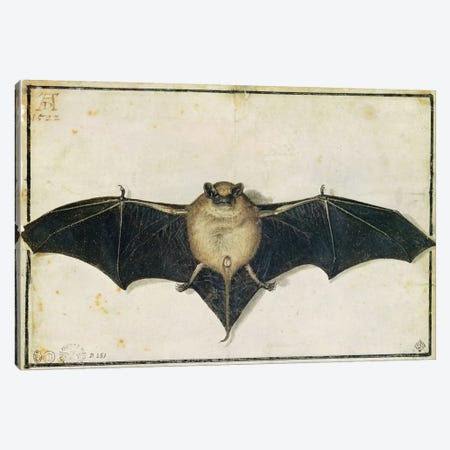 Bat, 1522 Canvas Print #BMN6557} by Albrecht Dürer Canvas Art