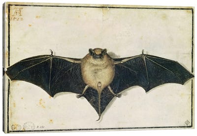 Bat, 1522 Canvas Print #BMN6557
