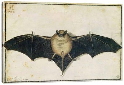 Bat, 1522 Canvas Art Print