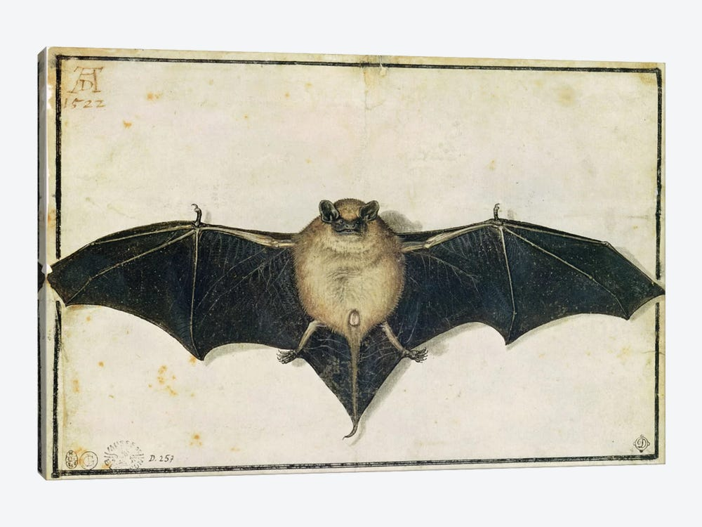 Bat, 1522 by Albrecht Dürer 1-piece Art Print