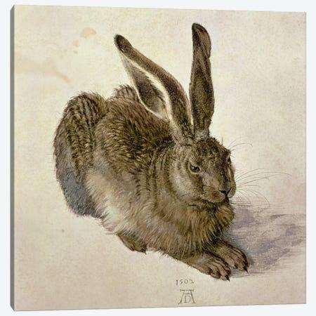 Hare, 1502 Canvas Print #BMN6565} by Albrecht Dürer Art Print