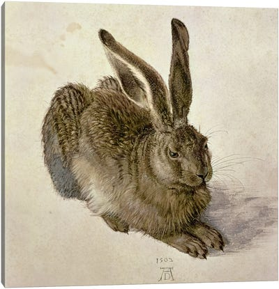 Hare, 1502 Canvas Art Print