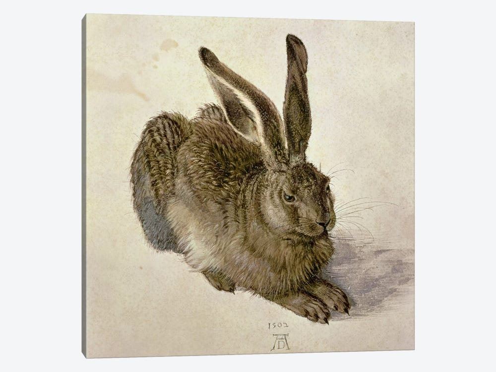 Hare, 1502 by Albrecht Dürer 1-piece Canvas Artwork