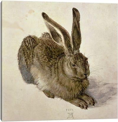 Hare, 1502 Canvas Art Print