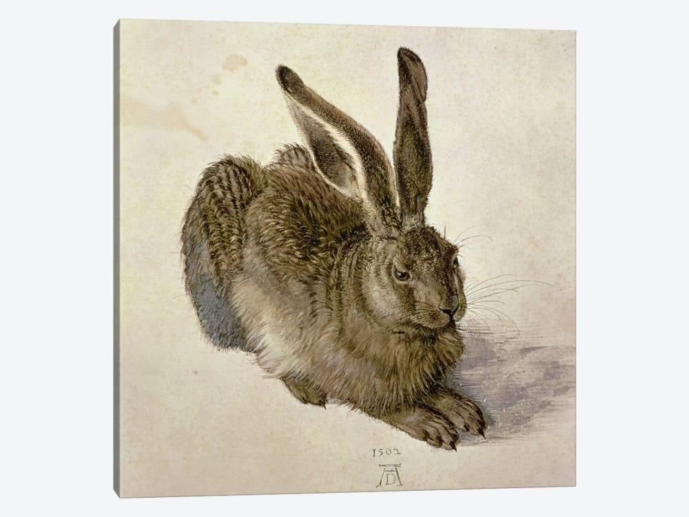 Hare, 1502 by Albrecht Dürer 1-piece Canvas Artwork