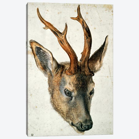 Head Of A Roe Deer Canvas Print #BMN6566} by Albrecht Dürer Canvas Art Print