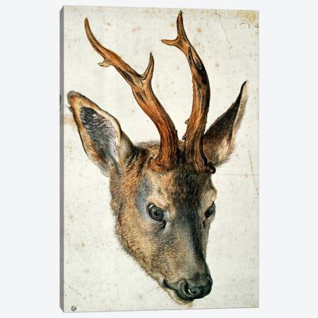 Head Of A Roe Deer Canvas Print #BMN6566} by Albrecht Dürer Canvas Art Print