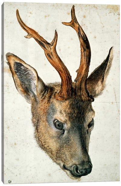 Head Of A Roe Deer Canvas Art Print