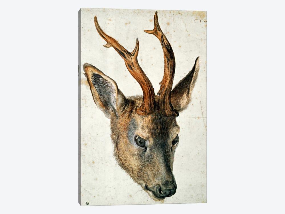 Head Of A Roe Deer by Albrecht Dürer 1-piece Canvas Print