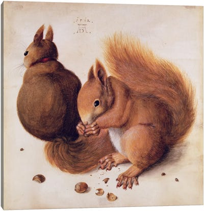 Squirrels, 1512 Canvas Art Print