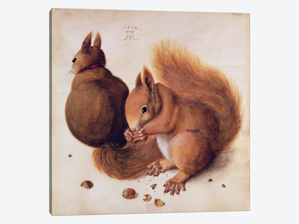 Squirrels, 1512 by Albrecht Dürer 1-piece Canvas Print
