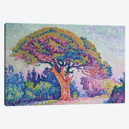 The Pine Tree at St. Tropez, 1909  Canvas Print #BMN659} by Paul Signac Art Print