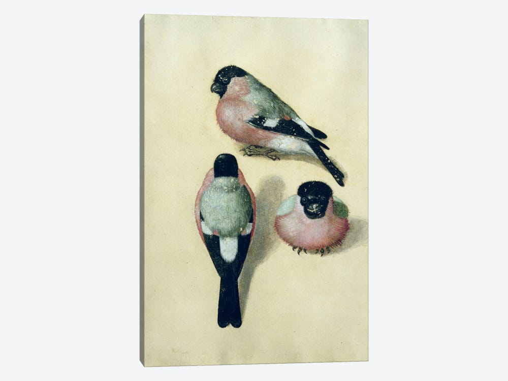 Three Studies Of A Bullfinch by Albrecht Dürer 1-piece Canvas Art