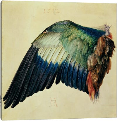 Wing Of A Blue Roller, 1512 Canvas Art Print
