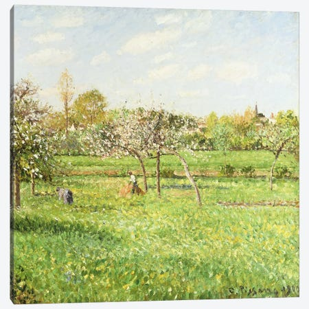 Morning, Spring, Grey Weather, Eragny, 1900 Canvas Print #BMN6660} by Camille Pissarro Canvas Art Print