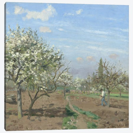 Orchard In Bloom, Louveciennes, 1872 Canvas Print #BMN6661} by Camille Pissarro Art Print