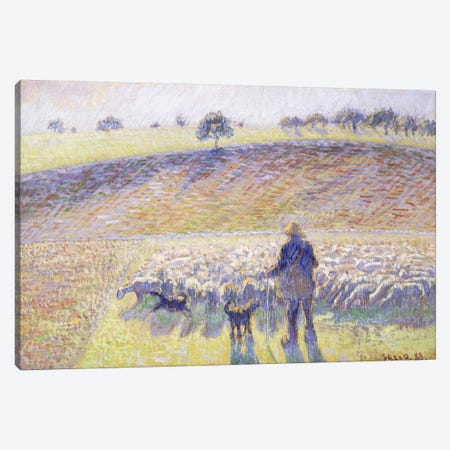 Shepherd With Sheep, 1888 Canvas Print #BMN6674} by Camille Pissarro Art Print
