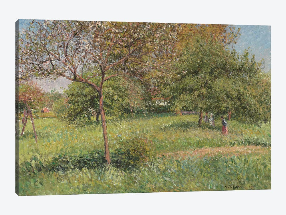 The Great Walnut Tree, Morning, Eragny, 1901 by Camille Pissarro 1-piece Canvas Art