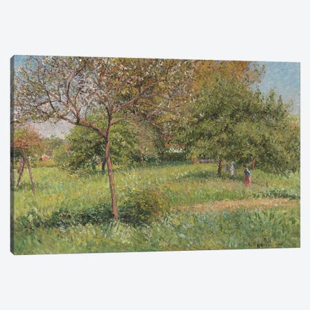The Great Walnut Tree, Morning, Eragny, 1901 3-Piece Canvas #BMN6689} by Camille Pissarro Canvas Print
