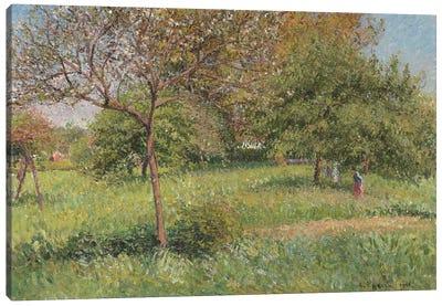 The Great Walnut Tree, Morning, Eragny, 1901 Canvas Art Print