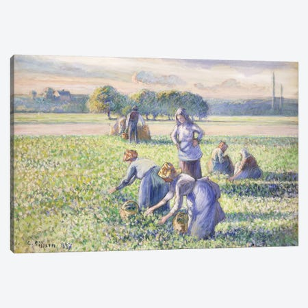 The Harvest Of Peas, 1887 Canvas Print #BMN6690} by Camille Pissarro Canvas Wall Art