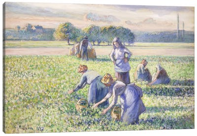 The Harvest Of Peas, 1887 Canvas Art Print