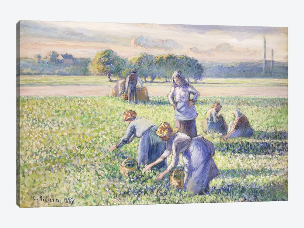 The Harvest Of Peas, 1887 by Camille Pissarro 1-piece Canvas Wall Art