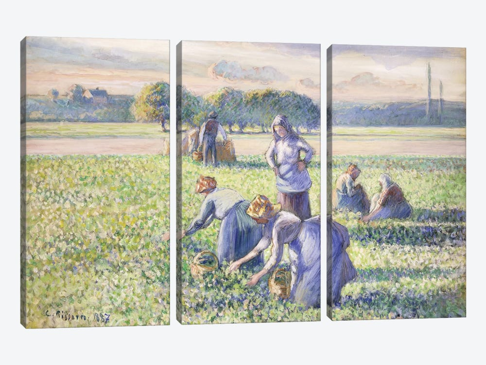 The Harvest Of Peas, 1887 by Camille Pissarro 3-piece Canvas Art