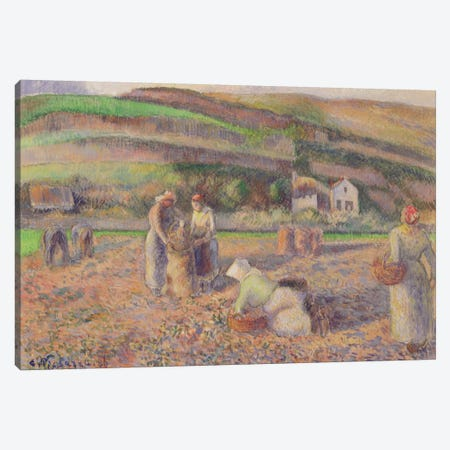 The Potato Harvest, 1886 Canvas Print #BMN6700} by Camille Pissarro Canvas Art