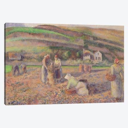 The Potato Harvest, 1886 Canvas Print #BMN6700} by Camille Pissarro Canvas Art