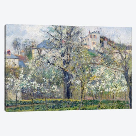 The Vegetable Garden With Trees In Blossom, Spring, Pontoise, 1877 Canvas Print #BMN6706} by Camille Pissarro Canvas Art Print