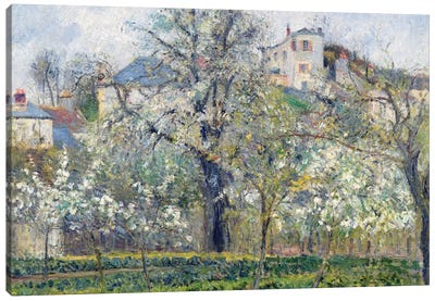 The Vegetable Garden With Trees In Blossom, Spring, Pontoise, 1877 Canvas Art Print