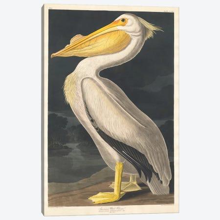 American White Pelican Canvas Print #BMN6710} by John James Audubon Canvas Print