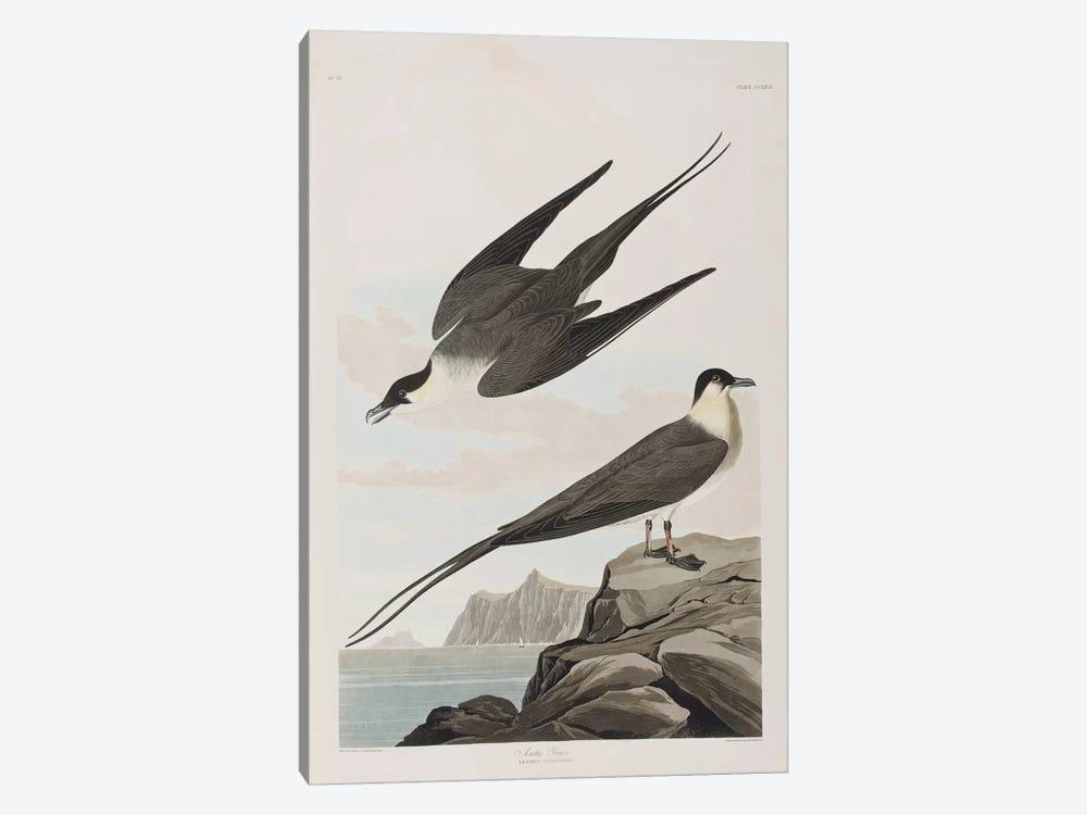 Arctic Jager by John James Audubon 1-piece Canvas Art