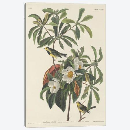 Bachman's Warbler & Franklinia Canvas Print #BMN6713} by John James Audubon Art Print