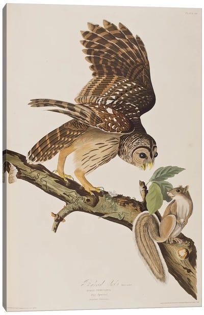 Audubon's Birds Of America Series: Barred Owl & Grey Squirrel Canvas Print #BMN6714
