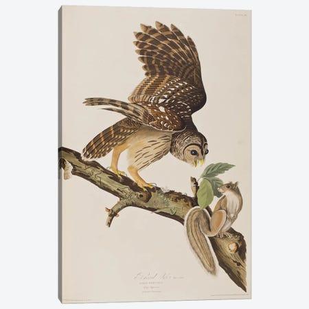Barred Owl & Grey Squirrel Canvas Print #BMN6714} by John James Audubon Canvas Wall Art