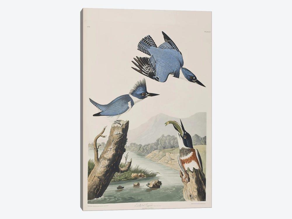Belted Kingfisher by John James Audubon 1-piece Canvas Art